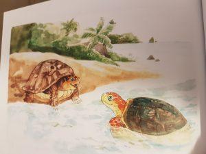 tartaruga di terra e di mare